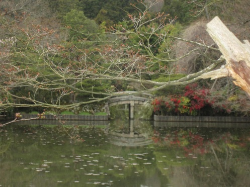 The pond of Ryoanji
