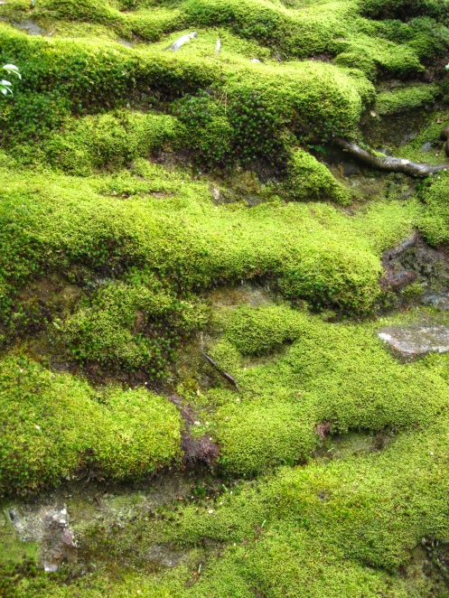 Moss covered grounds